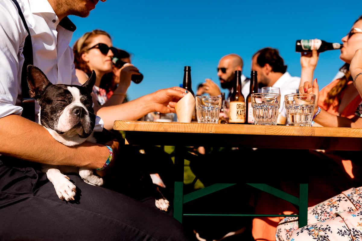 Hond ligt op schoot terwijl vrienden een biertje drinken